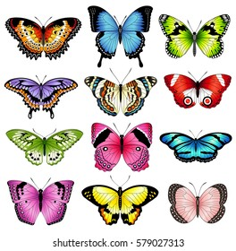 Collection of original vector illustrations of colorful butterfly insects