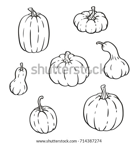 Collection Outline Pumpkins Gourds Different Types Stock Vector