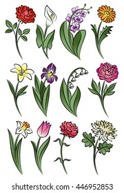 Collection of outlined flowers. Orchid, chrysanthemum, carnation, calla, rose, tulip, lily, peony, narcissus, iris and daisy. Vector illustration