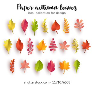 Collection paper autumn leaves. Vector illustration.