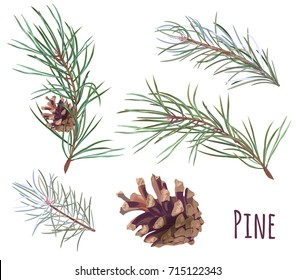Collection of pine branches and cones, needles on white background, hand digital draw, watercolor style, decorative botanical illustration for design, Christmas plants, realistic vector