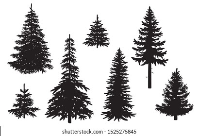 Collection of pine tree silhouettes – Vector, isolated
