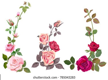 Collection of pink, red roses, horizontal border of vertical branches, bouquets of flowers, buds, green stems, leaves on white background, digital draw illustration, watercolor style, vintage, vector