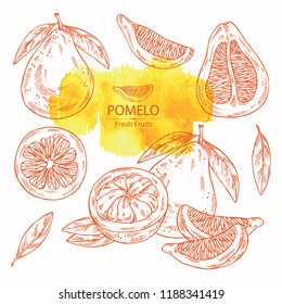 Collection of pomelo and pomelo slice. Vector hand drawn illustration
