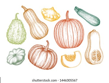 Collection of pumpkins. Ink sketch of butternut squash, pattypan and zucchini isolated on white background. Hand drawn vector illustration. Retro style