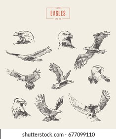 Collection of realistic eagles, hand drawn vector illustration, sketch