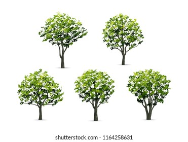 Collection of realistic tree isolated on white background. Natural object for landscape design, park and outdoor graphic. Vector illustration.