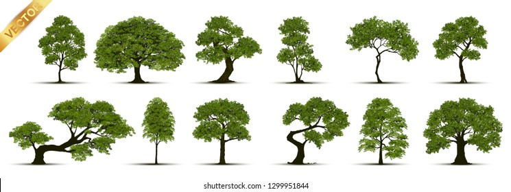 Collection  Realistic  Trees Isolated on White Background\n
