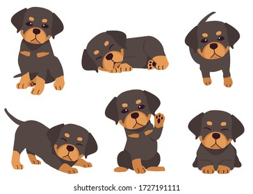 The collection of Rottweiler in many action. Graphic resource about set of dogs Rottweiler for graphic, content, etc.