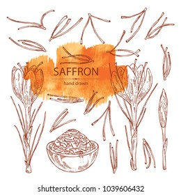 Collection of saffron: flower and saffron stamens. Vector hand drawn illustration.