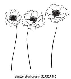 Collection set of anemone flower by hand drawing on white backgrounds.