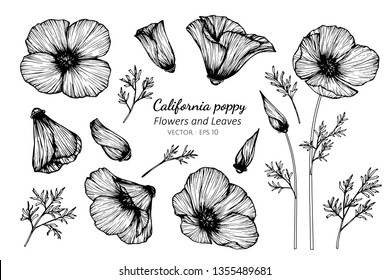 Collection set of california poppy flower and leaves drawing illustration. for pattern, logo, template, banner, posters, invitation and greeting card design.