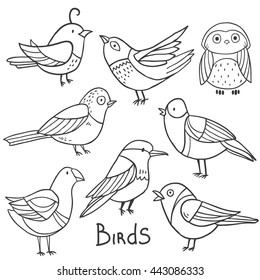 Collection set of cute bright birds isolated on white background
