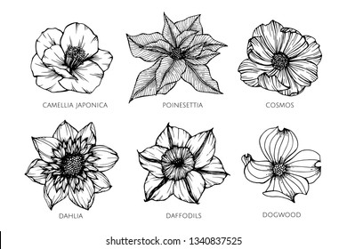 Collection set of flower drawing illustration. for pattern, logo, template, banner, posters, invitation and greeting card design.
