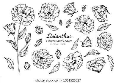 Collection set of lisianthus flower and leaves drawing illustration. for pattern, logo, template, banner, posters, invitation and greeting card design.