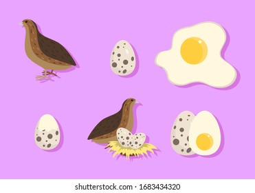 collection set of quail. the set consists of a quail, quail eggs and quail eggs in the nest