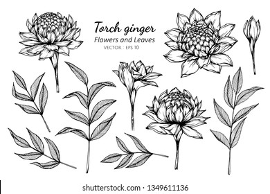 Collection set of torch ginger flower and leaves drawing illustration. for pattern, logo, template, banner, posters, invitation and greeting card design.