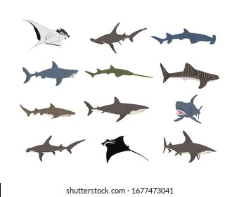 Collection of shark set illustration isolated on white. Great white, bull shark, devil ray, hammerhead, stingray, manta ray, reef shark, whale shark, saw fish. Predator fish in sea, ocean.