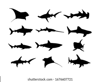 Collection of shark set silhouette isolated on white. Great white, bull shark, devil ray, hammerhead, stingray, manta ray, reef shark symbol, whale shark, saw fish. Predator fish in sea, ocean.