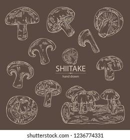 Collection of shiitake: mushroom and a bit of shiitake. Mushroom. Vector hand drawn illus