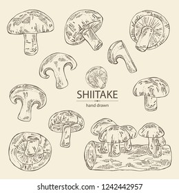 Collection of shiitake: mushroom and a bit of shiitake. Mushroom. Vector hand drawn illustration.