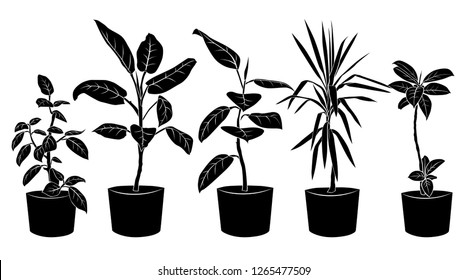 Collection silhouette beautiful ornamental plants for garden and home, tree and foliage in pots, black color isolated on white background. Vector illustration