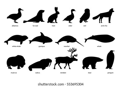 Collection of silhouettes of Arctic Animals