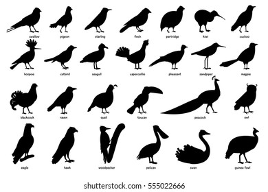 Collection of silhouettes of birds