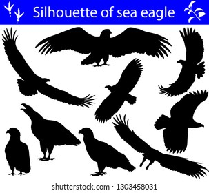 Collection of silhouettes of sea eagles
