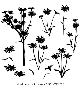 Collection of silhouettes of wild flowers, daisy, dandelions, blossom,  black color isolated on white background