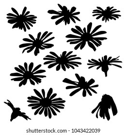 Collection of silhouettes of wild flowers, daisy, dandelions, blossom, closeup, black color isolated on white background