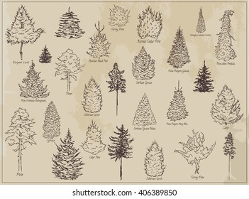 Collection of sketch ink trees. Forest trees, taiga trees, set of different hand drawn trees