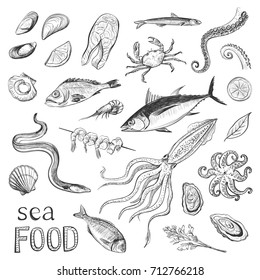 Collection of sketches sea food. Hand drawings of fish and sea delicacies isolated on white background