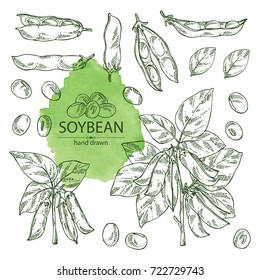 Collection of soybean: plant,  soybean pod and leaves. Vector hand drawn illustration.