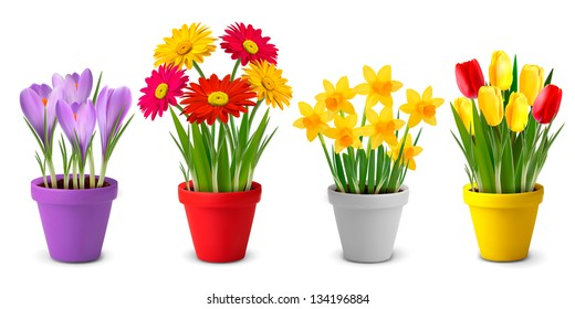 Collection of spring and summer colorful flowers in pots. Vector