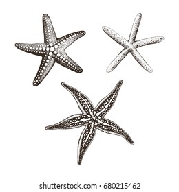 Collection of Starfish hand drawn, vector illustration.