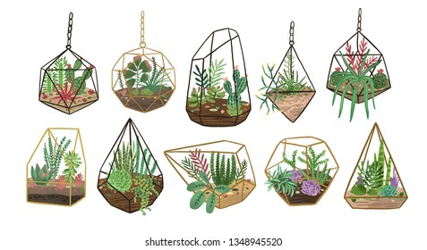 Collection of succulents, cactuses and other desert plants growing in various glass vivariums or florariums. Stylish home decor in trendy Scandinavian style. Colorful flat vector illustration.