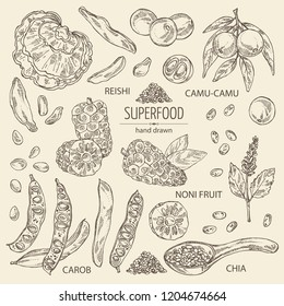 Collection of super food: reishi mushroom, morinda, noni fruit, camu camu, carob pods and chia. Super food. Vector hand drawn illustration.