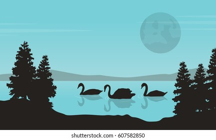 Collection of swan on lake landscape