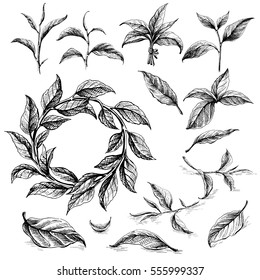 Collection of tea leaves. Green, black, Pekoe tea in graphic style, hand-drawn vector illustration.