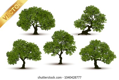 Collection  tree Realistic  on a white background.