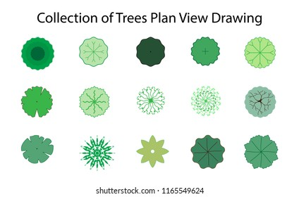 Collection of Trees Plan View Drawing for landscape architecture, vector design, Nature green spaces. Vector
