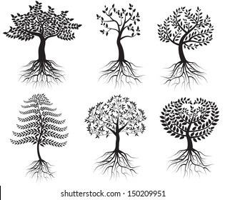 Collection of trees with roots