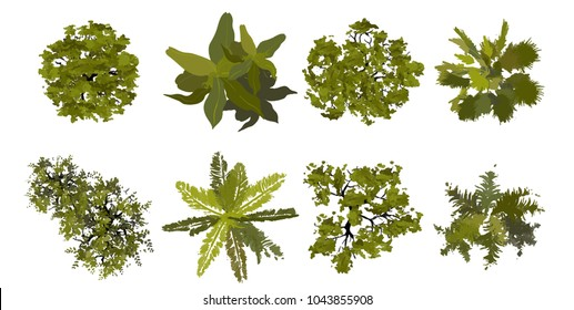 Collection Trees top view for landscape vector illustration.