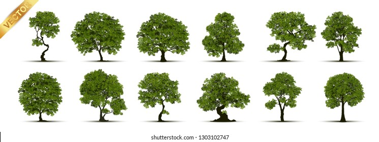 Collection of tree,trees isolated on white background.