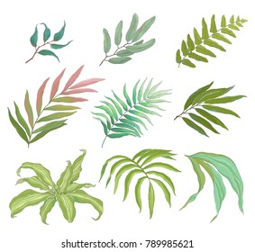 Collection of tropical colorful leaves, vector illustration in vintage style.