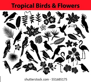 Collection of tropical exotic birds, parrots, flowers and some leaves as Silhouettes in black color like colibri, blue and yellow, scarlet macaw, amazon parrot, pink flamingos, cockatoo, cockatiel