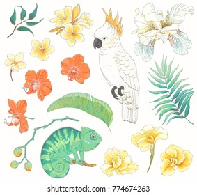 Collection of tropical hand-drawn design elements. Vector floral illustration with Parrot, Chameleon, leaves, flowers Plumeria, Orchid, Canna and Fleur de lis.