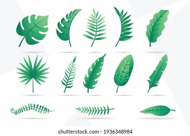Collection of tropical leaves Vector set of different green tropical palm leaves isolated on white background