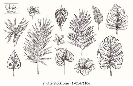 Collection of tropical plants, leaves and flowers. Vector Hand Drawn Sketch Botanical Illustration. Highly detailed plant. Palm leaves. Monstera, Plumeria, hibiscus, Strelitzia reginae, Anthurium